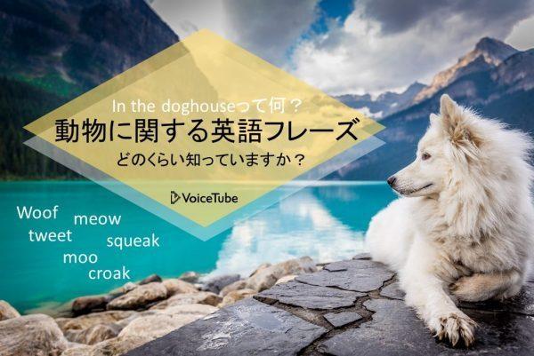 犬 鳴き声 英語 英語 動物 鳴き声