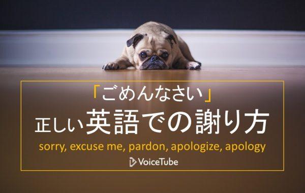 sorry, excuse me, pardon 違い ごめんなさい 英語