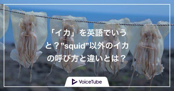 イカ 英語 squid,違い